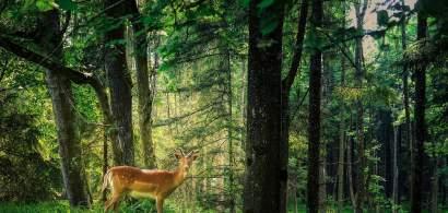 Parlamentare 2020: Situația pădurilor din România - 2019 vs. 2016