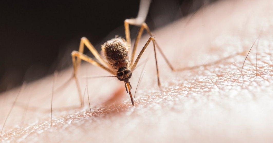 Țânțari cu virusul West Nile, prezenți și în București. Ce măsuri ia Primăria Capitalei