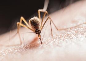 Țânțari cu virusul West Nile, prezenți și în București. Ce măsuri ia Primăria...