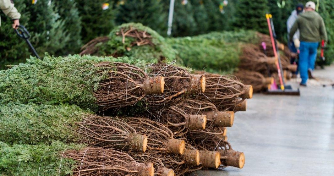 Romsilva: 453 de brazi confiscati la inceputul sezonului de iarna din taieri ilegale