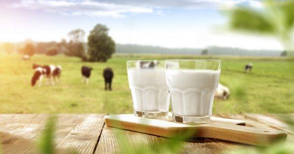 Piata de lactate din Romania: cum au evoluat afacerile primilor 10 mari...