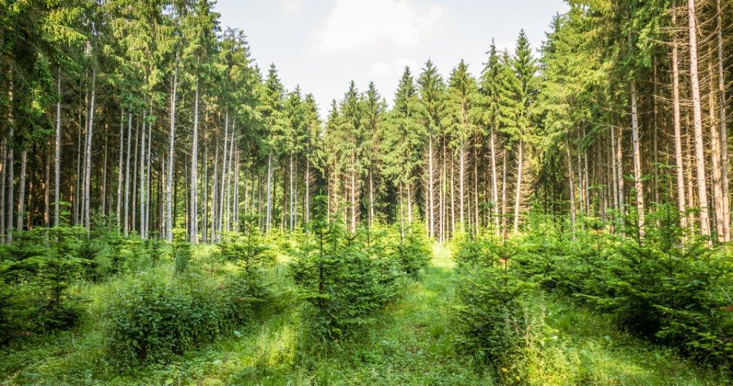 Cum a crescut suprafața pădurilor din România anul trecut