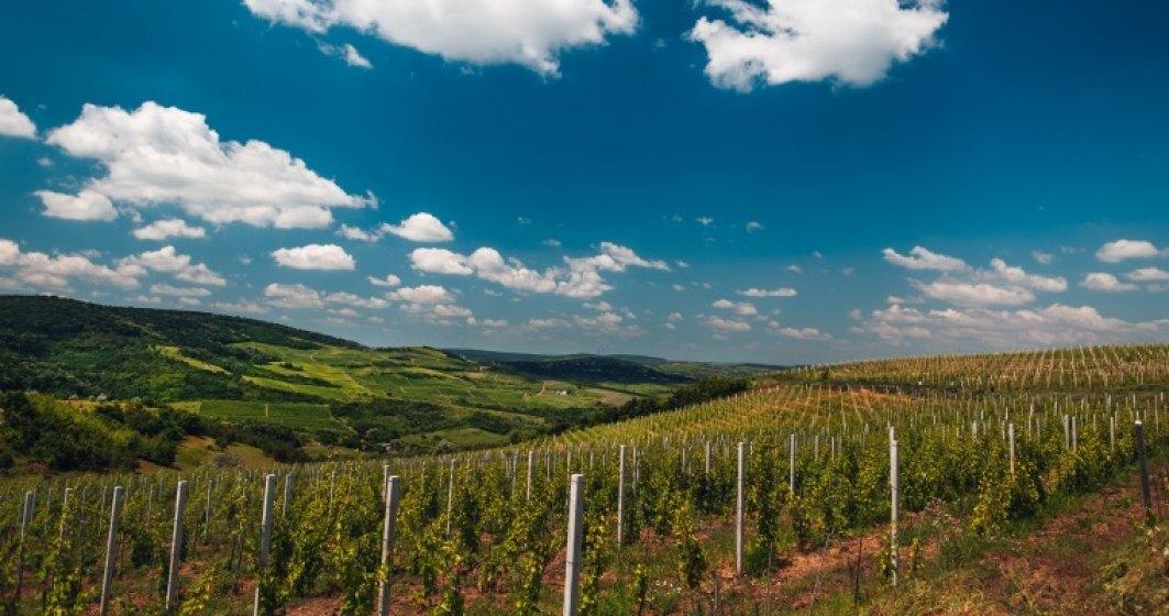 Producătorii din sectorul vitivinicol vor primi până la data de 31 decembrie 2020 ajutorul de stat