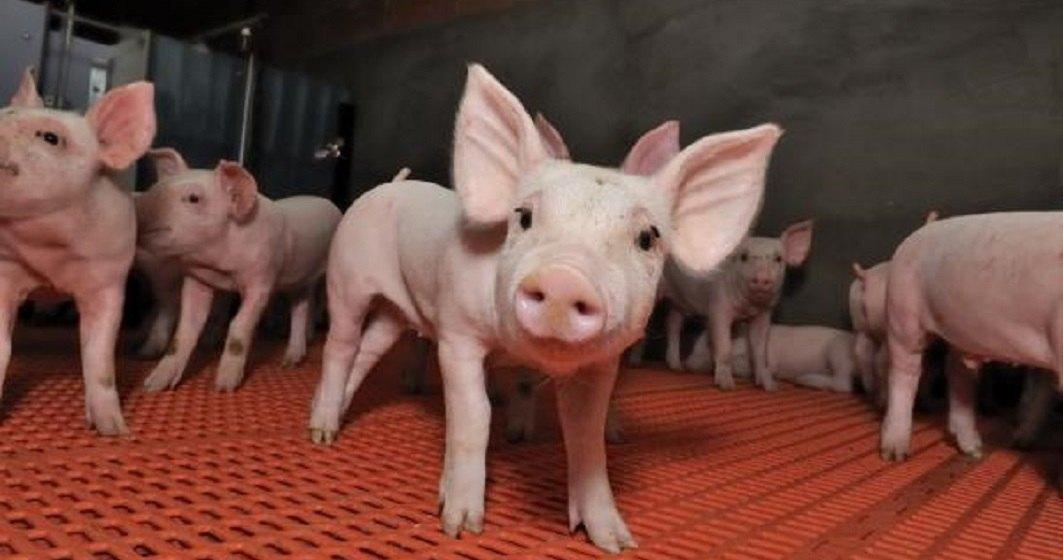 Europarlamentarul Daniel Buda solicita premierului Dancila sa ceara activarea mecanismului european de protectie civila pentru pesta porcina