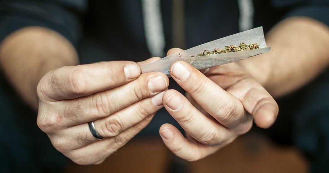Trei barbati arestati pentru trafic de droguri; au fost indisponibilizate peste 50 kg de cannabis
