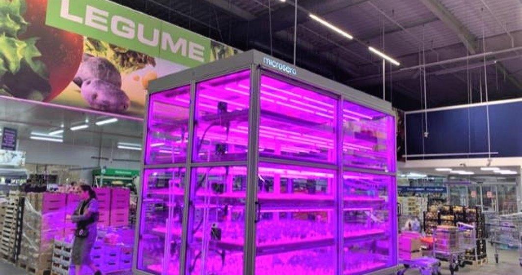 Metro aduce in magazinul din Baneasa o microsera care va creste plante aromatice, care vor ajunge direct la raft