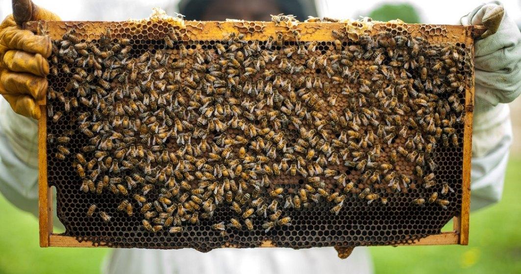 Apicultor: Ajutorul de 25 lei de la stat nu acoperă nici măcar 10% din producția de miere pe an