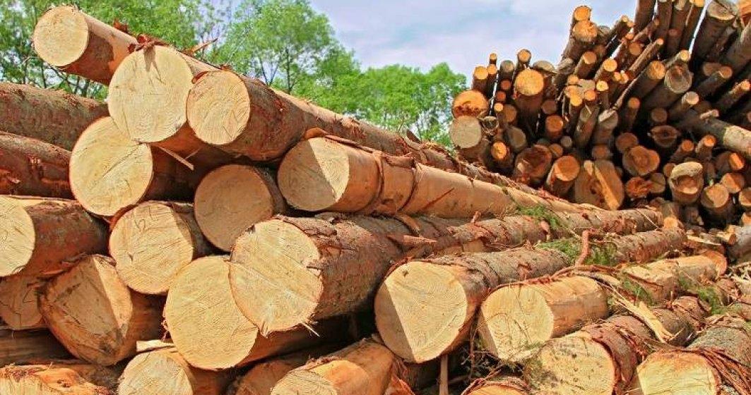 IGPR: Politistii au confiscat peste 1.000 metri cubi de material lemnos, de la inceputul lunii februarie