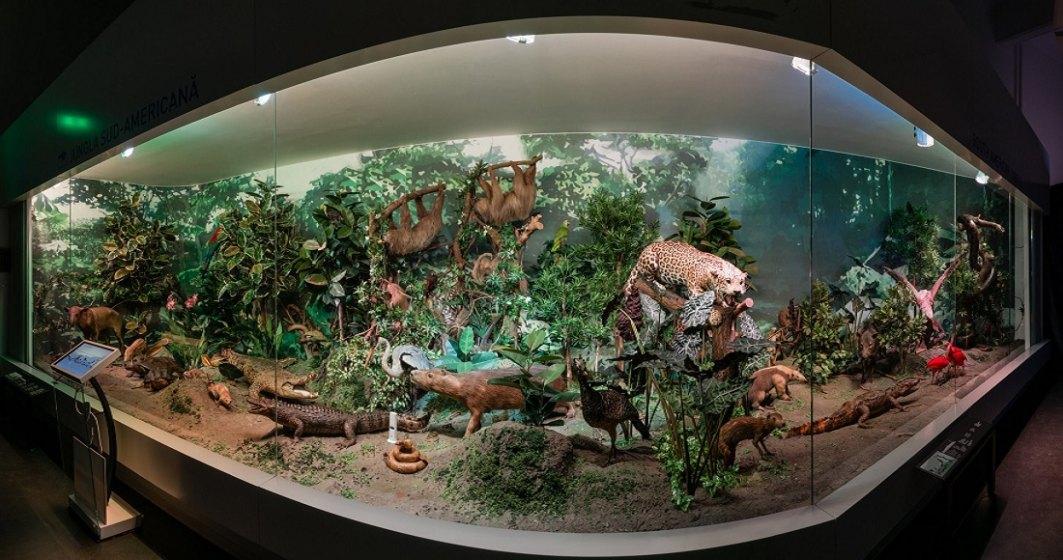Muzeul Antipa își redeschide porțile. Când și în ce condiții putem vizita muzeul