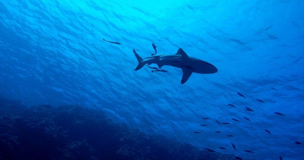 STUDIU: Rechinii folosesc câmpul magnetic al Pământului drept GPS