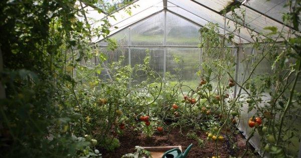 Reorganizarea producției de fructe și legume, esențială pentru atingerea...