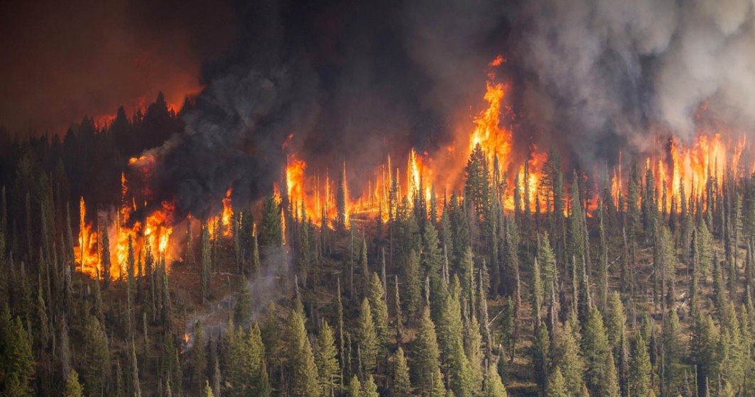 Focuri masive, fara precedent: Cum impacteaza intreaga planeta