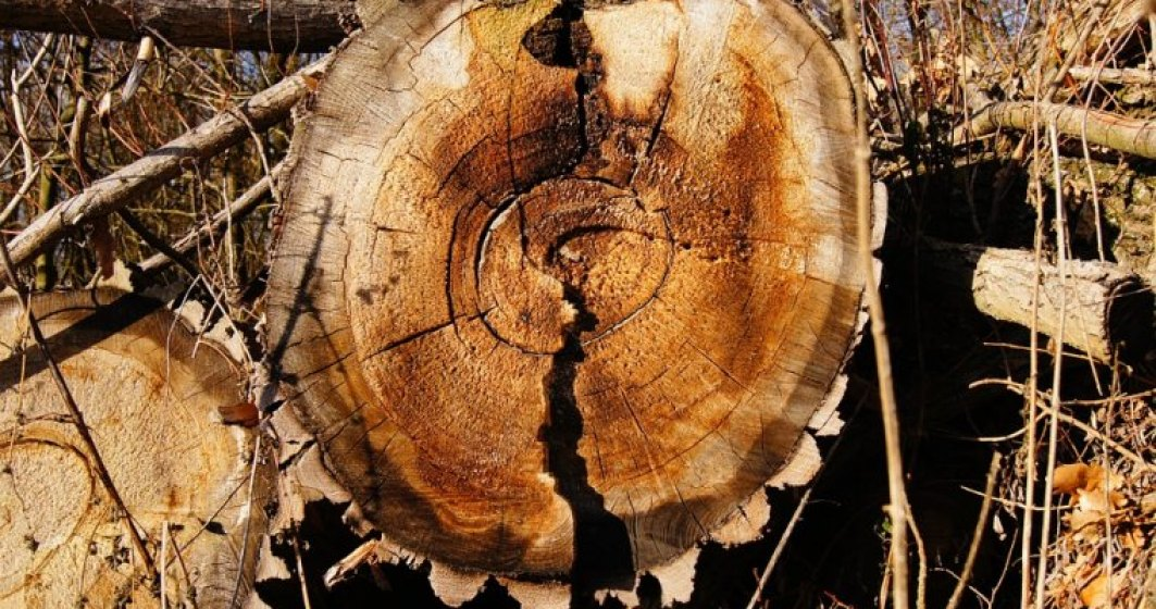Klaus Goetz, Hornbach: Vom reduce volumul de produse din lemn achizitionat de la Schweighofer cu 90%