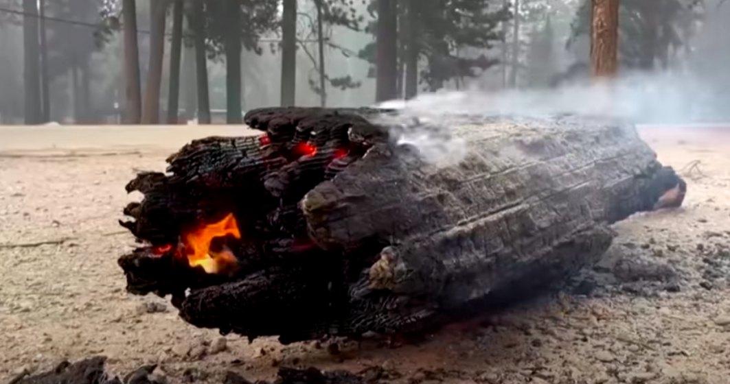 """""""Dixie Fire"""" devine al doilea cel mai mare incendiu din istoria statului California"""