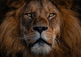 Cum ar fi să lucrăm patru zile pe săptămână ca niște lei, apoi să ne odihnim?