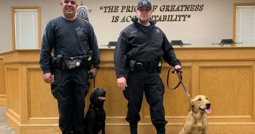 Primul stat care va folosi câinii în depistarea cazurilor pozitive de COVID