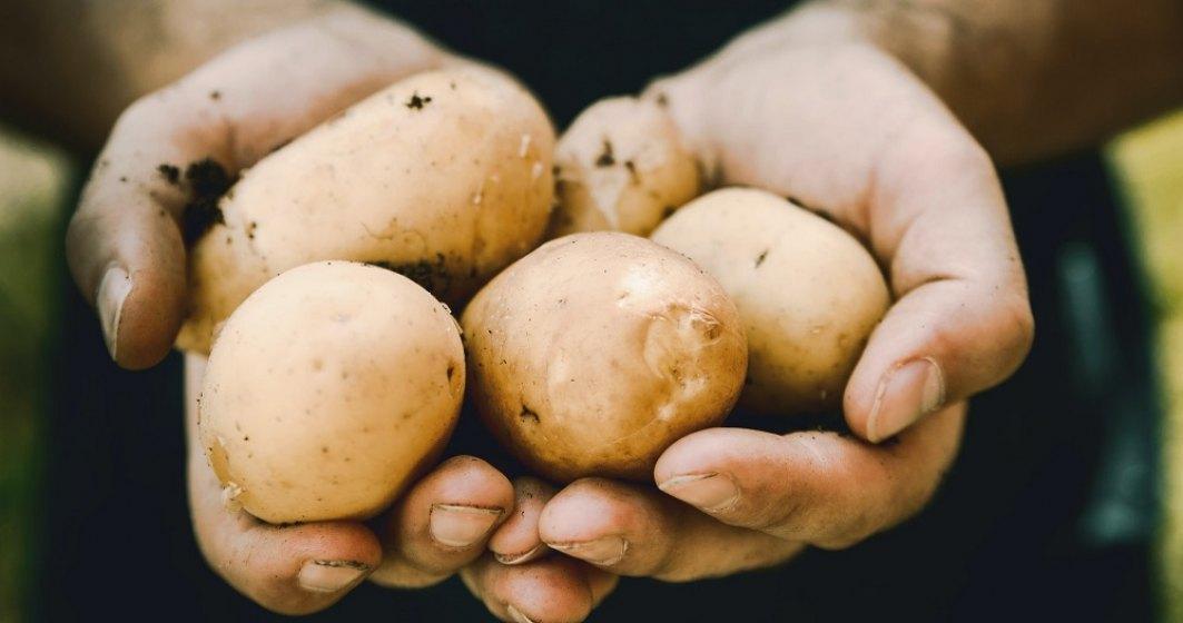 Eurostat: România este al şaptelea producător de cartofi din UE. Cine conduce clasamentul