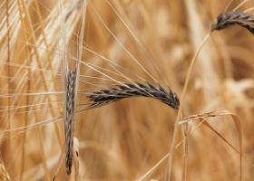 ANM: Anul agricol 2019-2020 este afectat de secetă pedologică puternică şi...