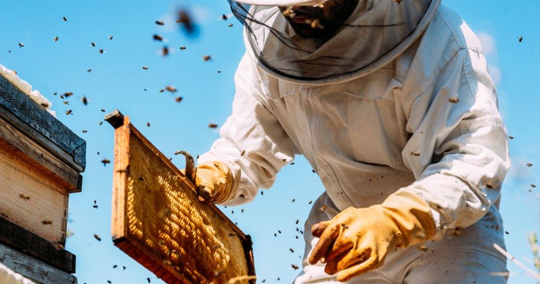 Romanul care ofera intregii lumi cea mai buna aplicatie de apicultura