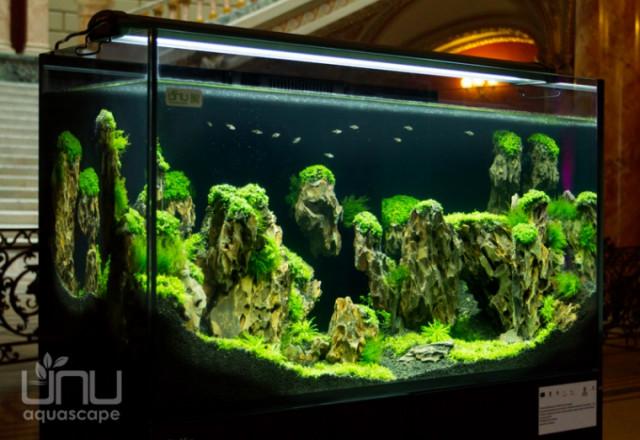 Designul interior pentru acvarii, o afacere profitabila