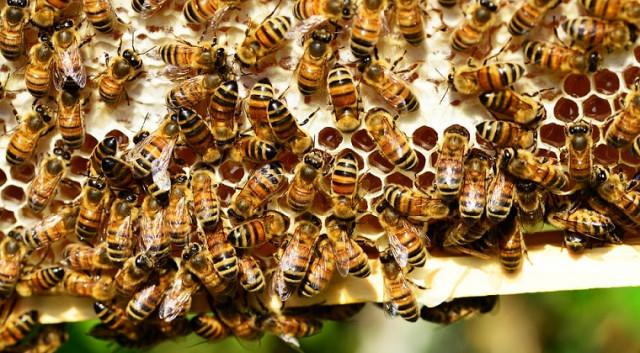 O afacere cu miere de albine