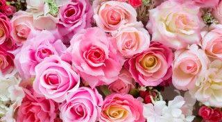 Cum infloreste o afacere cu trandafiri