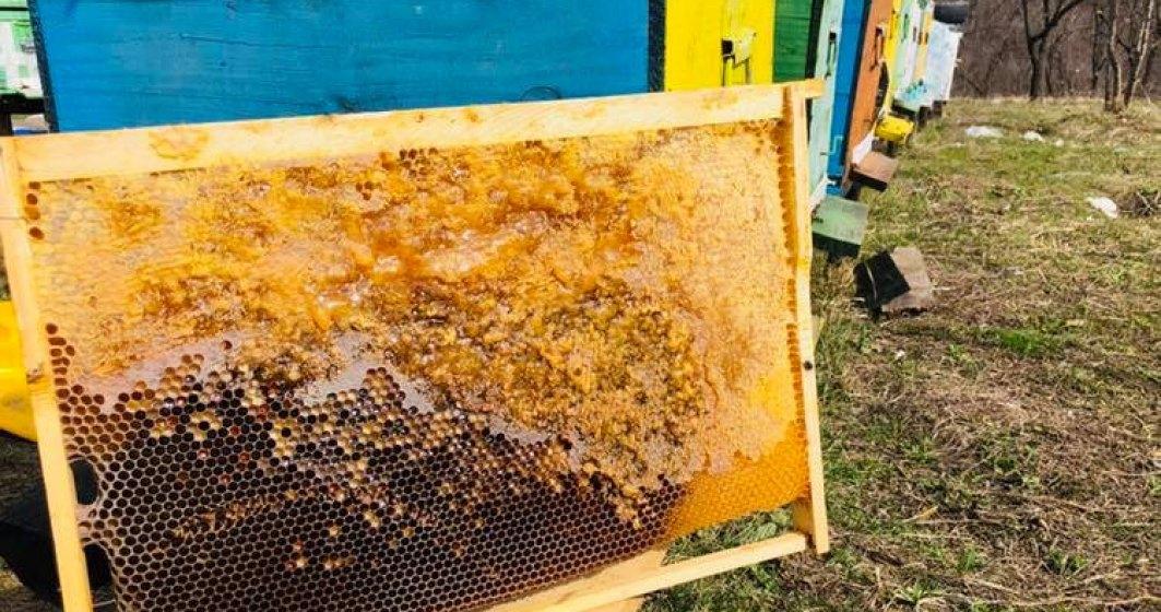 Bee Farming, afacerea cu albine care vinde in online